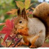 Scurry to the Autumn Squirrel Trail at Fota House & Gardens